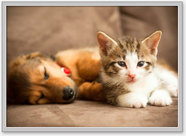 northwest pet vaccination clinic faqs