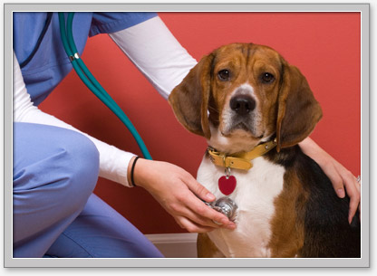 low-cost WA, OR, ID veterinary services